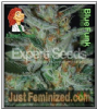 Expert Blue Funky Blue Cheese Fem 5 Ganja Seeds